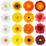 Varios blanco, amarillo, naranja y rojo Imagen de archivo