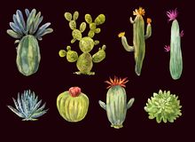 Varios cactus a mano Ejemplo de los succulents aislados encendido stock de ilustración