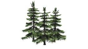 Varios diversos árboles de cedro de Alaska stock de ilustración
