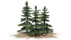 Varios diversos árboles de cedro de Alaska libre illustration
