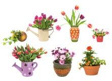 Varios envases de los crisoles de flor aislados en blanco Fotografía de archivo libre de regalías