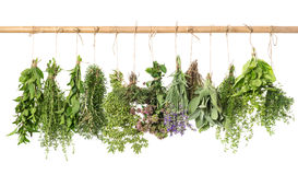Varios fresh herbs hanging isolated on white. Various fresh herbs hanging isolated on white background stock photos