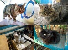 Varios gatos perdidos Fotografía de archivo