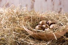 Varios huevos de codornices en una jerarquía de la paja Foto de archivo