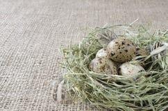Varios huevos de codornices en una jerarquía del heno, primer fotos de archivo