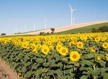 Varios molinoes de viento en los girasoles colocan Foto de archivo libre de regalías