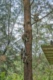 Varios monos en un árbol foto de archivo libre de regalías