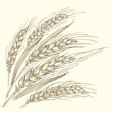 Varios oídos maduros del trigo Imagen de archivo