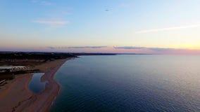 Varios pájaros que vuelan sobre la playa en la puesta del sol metrajes