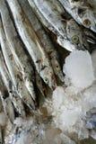 Varios pescados asiáticos de la cinta Fotos de archivo libres de regalías