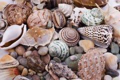 Varios seashells imagen de archivo libre de regalías