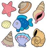 Varios shelles y colección de los pescados Fotos de archivo libres de regalías