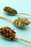 Varios tés herbarios Imagen de archivo libre de regalías