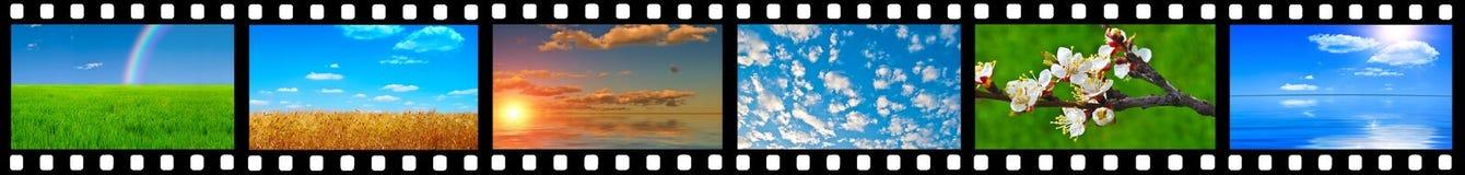 Varios tiros de la naturaleza Imagen de archivo