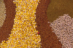Various Agricultural Crop Seed Royalty Free Stock Image