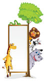 Various animals and board. Illustration of various animals and board on a white Stock Photography