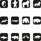 Various animals icons, sticker labels, animals buttons and icons, icons and buttons collection royalty free illustration