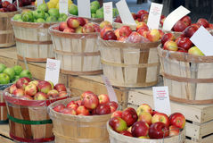 Various Apples. Several Bushels of Colorful Apples Royalty Free Stock Photo