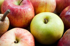 Various  apples Royalty Free Stock Images