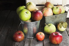 Various apples in metal bucket on a wooden background Royalty Free Stock Photos
