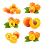 Various apricot groups Stock Images