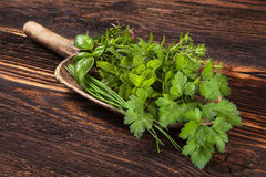Various aromatic culinary herbs, rustic style. Stock Photos