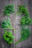 Various aromatic herbs and spices from garden  green mint ,fenne Stock Image