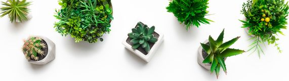 Various artificial evergreen plants in pots, top view. Various artificial evergreen plants in pots on white background, top view royalty free stock images