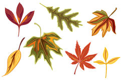Various autumn fall leaves Stock Photo