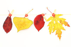 Various autumn leaves Royalty Free Stock Photos