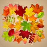 Various autumn leaves on beige background Royalty Free Stock Photo