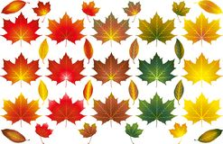 Various Autumn Leaves Illustrated Vectors royalty free stock photos