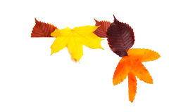 Various autumn leaves isolated on white Stock Images