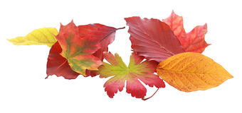 Various Autumn Leaves on White Background Stock Photo