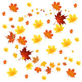 Various autumn leaves Stock Photos