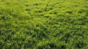 Various balloons flight on  green grass field. Various balloons flight in evening light and  green grass field stock video footage