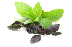 Various basil Royalty Free Stock Photos
