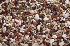 Various Beans Royalty Free Stock Image
