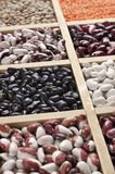 Various beans in box Stock Images
