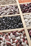 Various beans in box. Various legume grains close-up in wooden box: white, black and purple speckled beans, red and green lentils. Shallow DOF Stock Photos