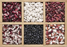 Various beans in box. Various legume grains in wooden box: white, black, purple and red speckled beans. Top view Royalty Free Stock Images