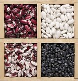 Various beans in box Royalty Free Stock Photography