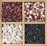 Various beans in box. Various legume grains in wooden box: white, black and purple speckled beans. Top view Royalty Free Stock Image