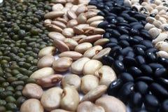 Various beans close up Royalty Free Stock Photo