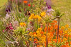 Various flowers in beautiful bright colorful flower garden royalty free stock photo