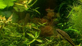 Different fish swim in the aquarium stock footage