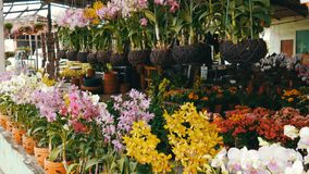 Various beautiful flowers in pots in botanical garden or on a store shelves. Various beautiful flowers in pots in a botanical garden or on a store shelves stock video footage