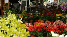 Various beautiful flowers in pots in botanical garden or on a store shelves. Various beautiful flowers in pots in a botanical garden or on a store shelves stock video