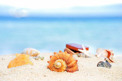 Various beautifull seashells starfish and chest against the tropical blue sea Royalty Free Stock Image