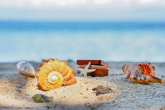 Various beautifull seashells starfish and chest against the tropical blue sea Stock Image